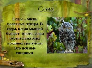 Рысь Рысь живёт в таёжных лесах. Это хищное животное. Продолжительность жизни...