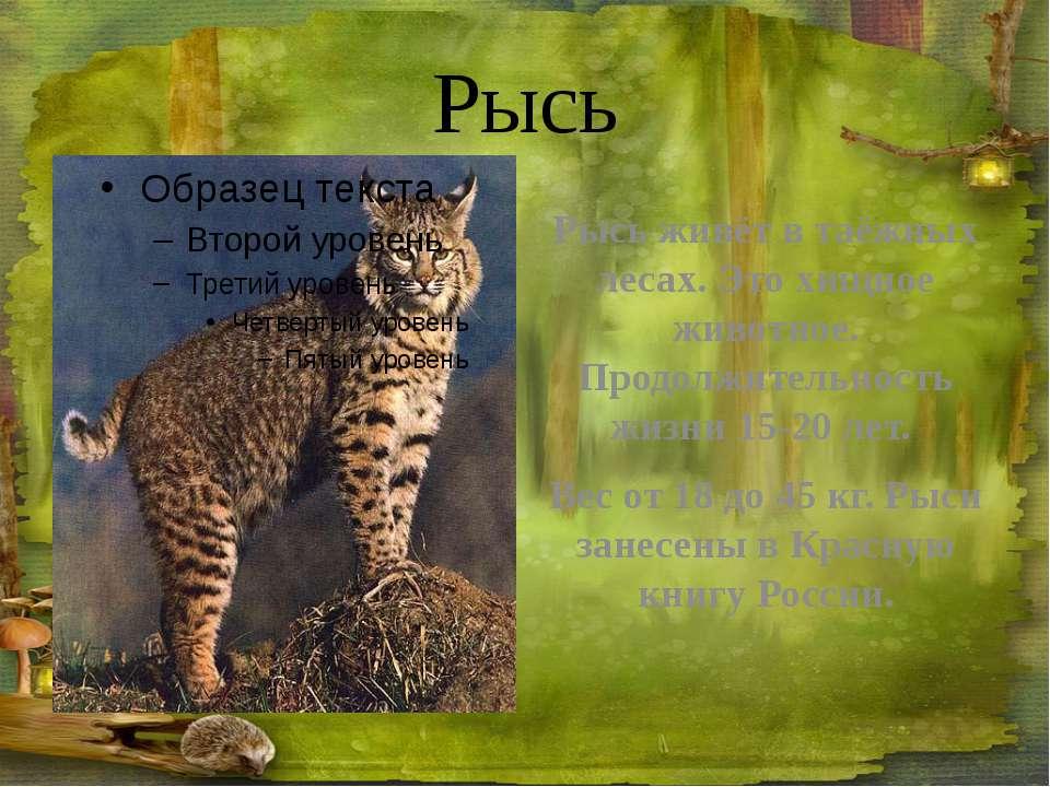 Медведь Медведь – сильный крупный зверь. Но в то же время ловкий и подвижный....