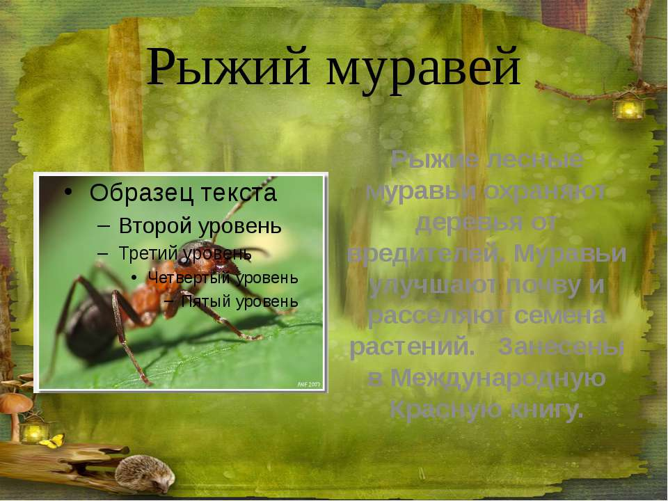 Ящерица живородящая Живородящая ящерица имеет размер 18см, из которых 11см ...