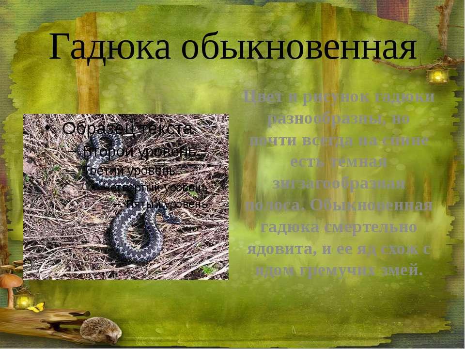 Глухарь ГЛУХАРЬ – большой лесной петух. Весной глухари начинают токовать – пе...