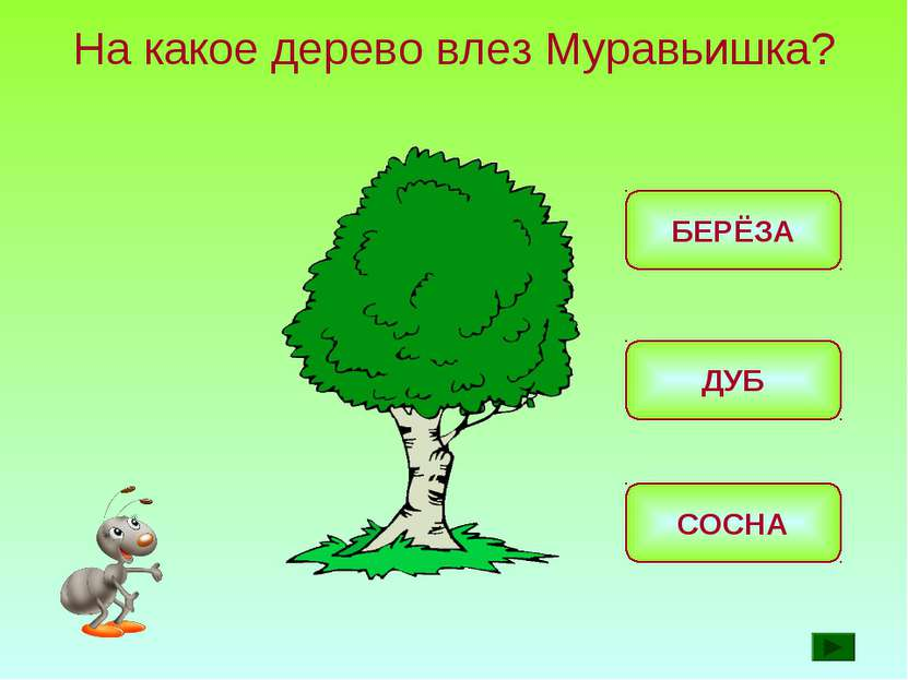На какое дерево влез Муравьишка? ДУБ БЕРЁЗА СОСНА