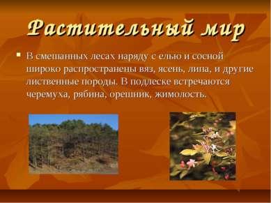 Растительный мир В смешанных лесах наряду с елью и сосной широко распростране...
