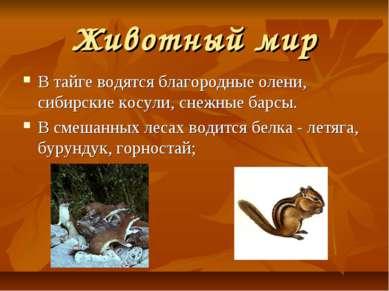 Животный мир В тайге водятся благородные олени, сибирские косули, снежные бар...