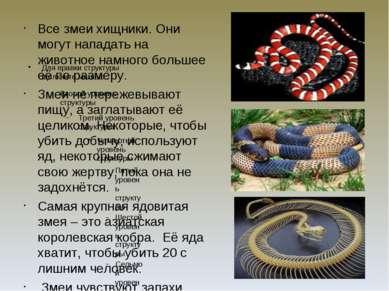 Все змеи хищники. Они могут нападать на животное намного большее её по размер...
