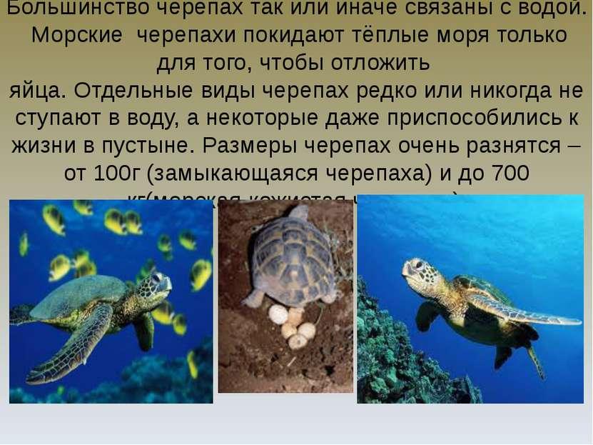 Большинство черепах так или иначе связаны с водой. Морские черепахи покидают ...