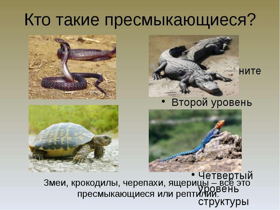 Кто такие пресмыкающиеся? Змеи, крокодилы, черепахи, ящерицы – всё это пресмы...