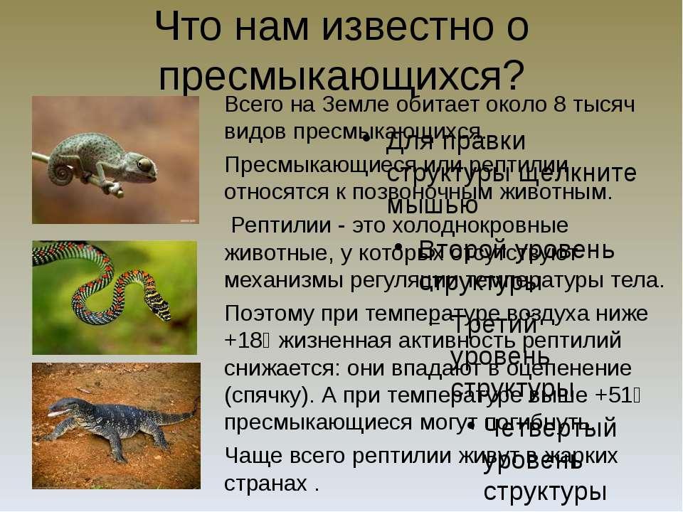 Что нам известно о пресмыкающихся? Всего на Земле обитает около 8 тысяч видов...