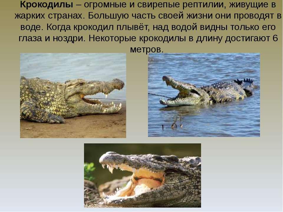Крокодилы – огромные и свирепые рептилии, живущие в жарких странах. Большую ч...