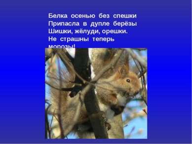 Белка осенью без спешки Припасла в дупле берёзы Шишки, жёлуди, орешки. Не стр...