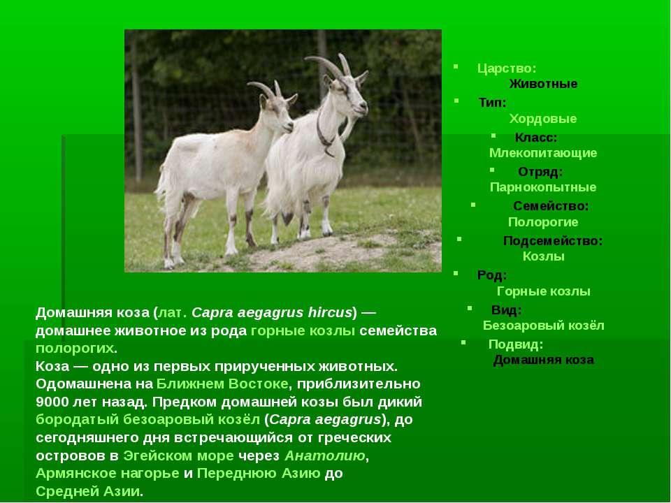 Царство: Животные Тип: Хордовые Класс: Млекопитающие Отряд: Парнокопытные Сем...