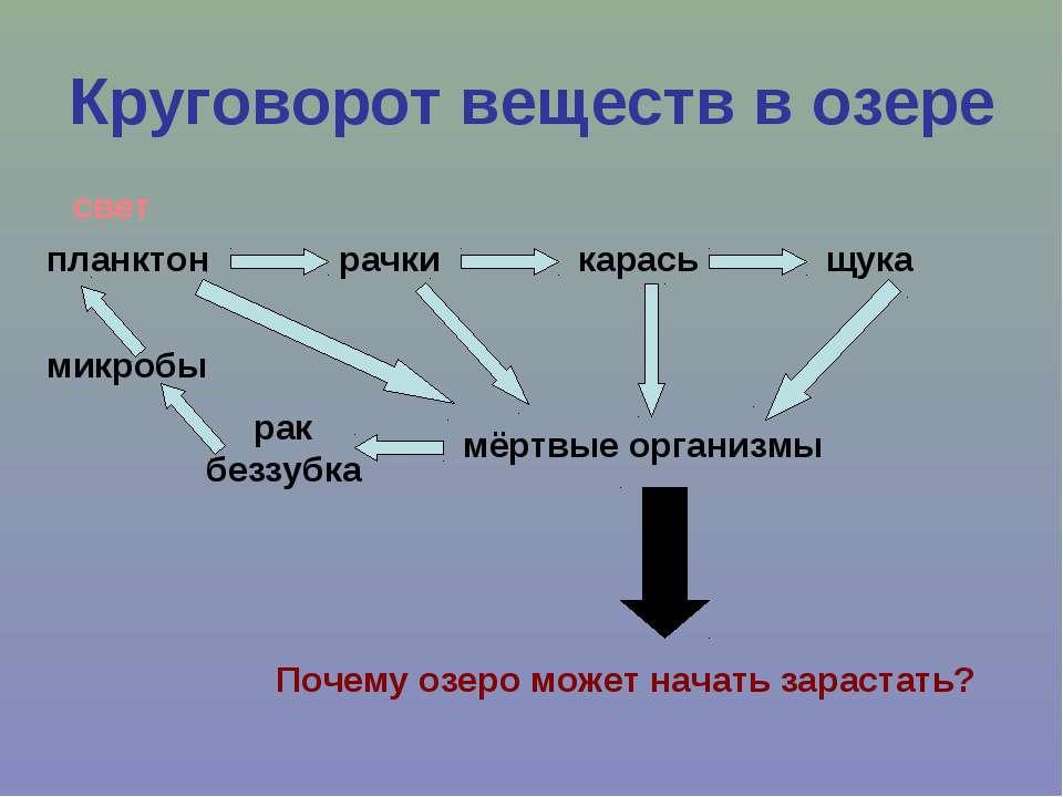 Круговорот веществ в озере планктон рачки карась щука мёртвые организмы рак б...