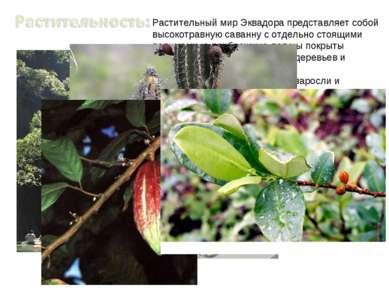 Растительный мир Эквадора представляет собой высокотравную саванну с отдельно...