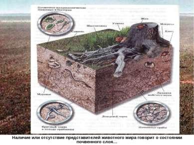 Наличие или отсутствие представителей животного мира говорит о состоянии почв...