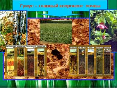 Гумус – главный копронент почвы