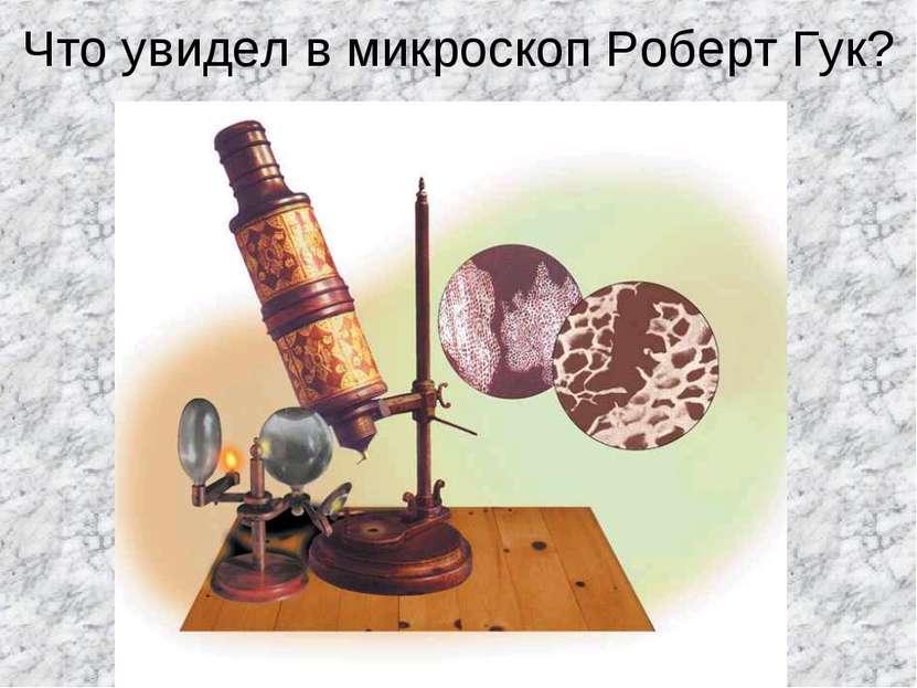 Что увидел в микроскоп Роберт Гук?