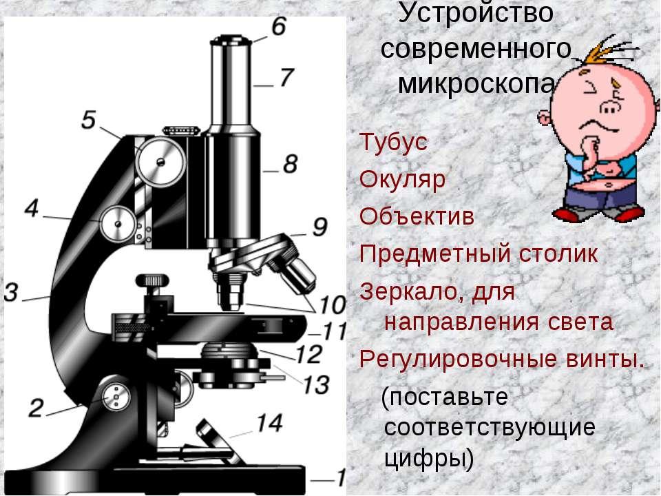 Устройство современного микроскопа Тубус Окуляр Объектив Предметный столик Зе...