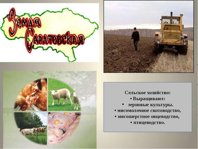 Сельское хозяйство: • Выращивают: зерновые культуры. • мясомолочное скотоводс...