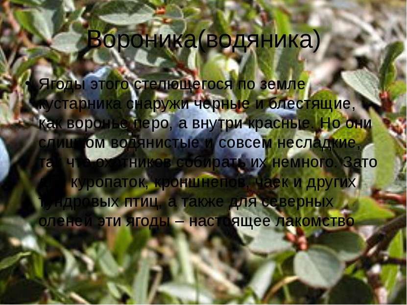 Вороника(водяника) Ягоды этого стелющегося по земле кустарника снаружи черные...