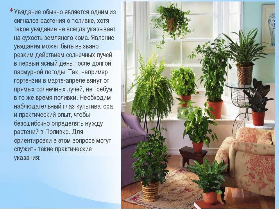 Увядание обычно является одним из сигналов растения о поливке, хотя такое увя...