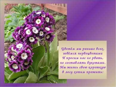 Цветём мы раньше всех, зовёмся первоцветами И просим нас не рвать, не составл...