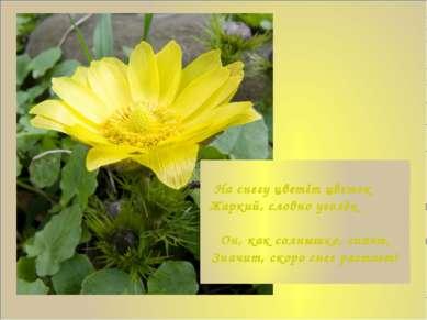 На снегу цветёт цветок Жаркий, словно уголёк Он, как солнышко, сияет, Значит,...