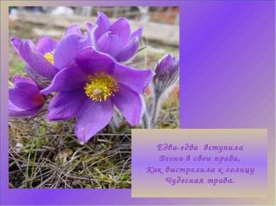 Едва-едва вступила Весна в свои права, Как выстрелила к солнцу Чудесная трава.