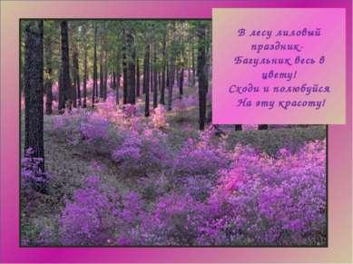 В лесу лиловый праздник- Багульник весь в цвету! Сходи и полюбуйся На эту кра...