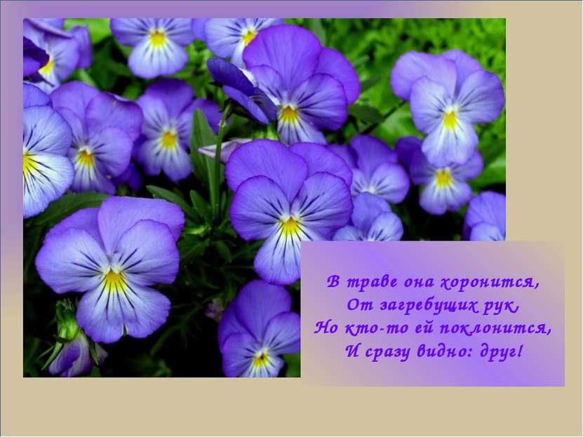 В траве она хоронится, От загребущих рук, Но кто-то ей поклонится, И сразу ви...