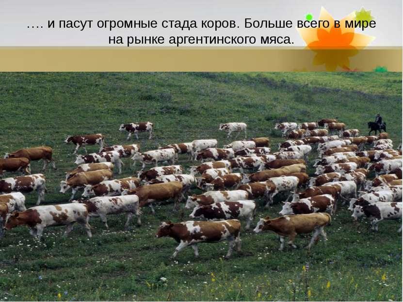 …. и пасут огромные стада коров. Больше всего в мире на рынке аргентинского м...