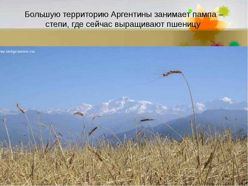 Большую территорию Аргентины занимает пампа – степи, где сейчас выращивают пш...
