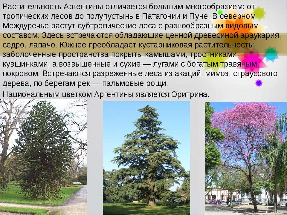 Растительность Аргентины отличается большим многообразием: от тропических лес...