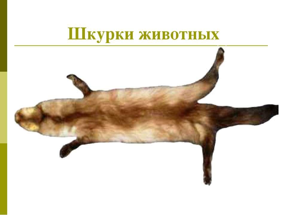 Шкурки животных