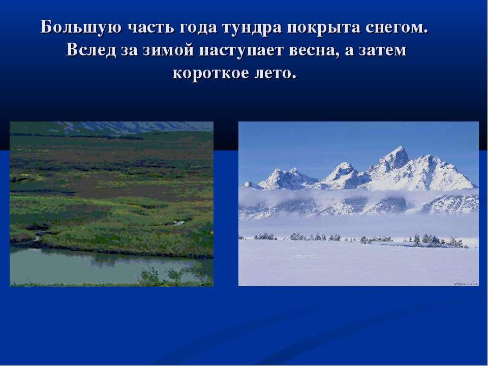 Большую часть года тундра покрыта снегом. Вслед за зимой наступает весна, а з...