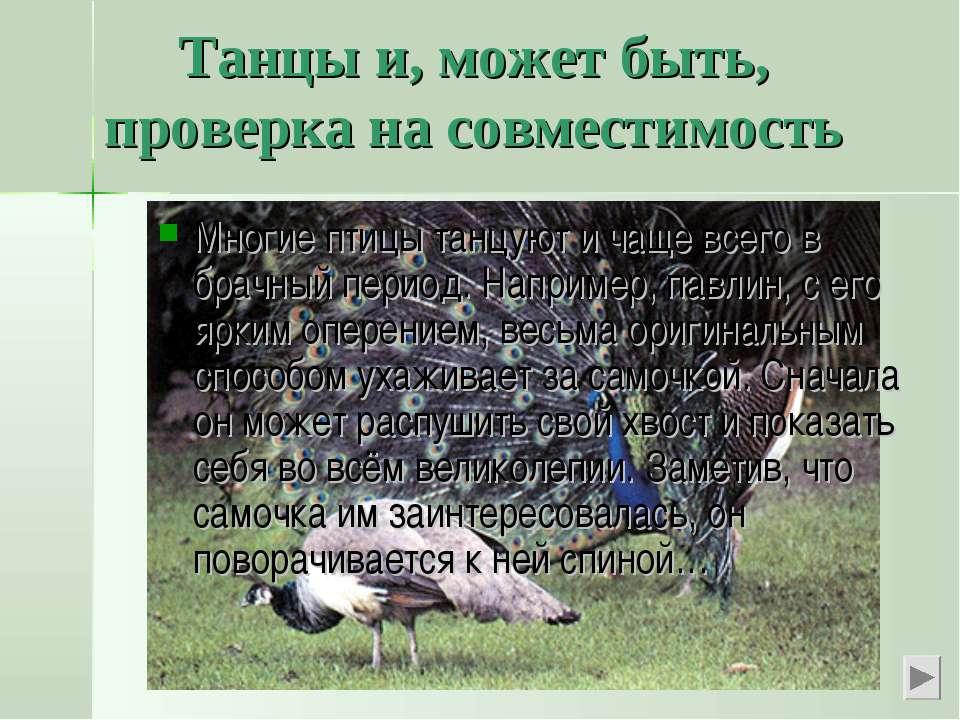 Танцы и, может быть, проверка на совместимость Многие птицы танцуют и чаще вс...