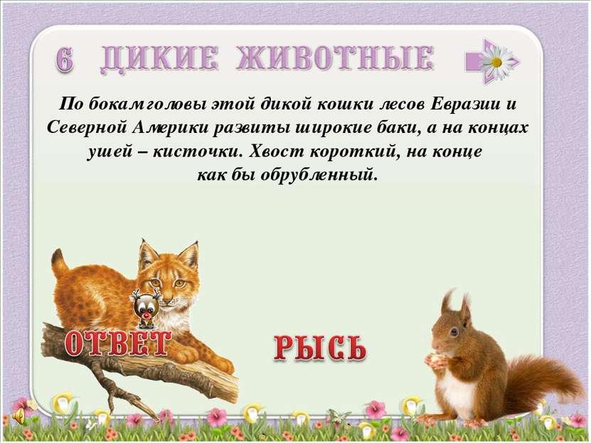 По бокам головы этой дикой кошки лесов Евразии и Северной Америки развиты шир...