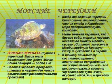 МОРСКИЕ ЧЕРЕПАХИ ЗЕЛЕНАЯ ЧЕРЕПАХА (суповая черепаха) Масса тела достигает 200...