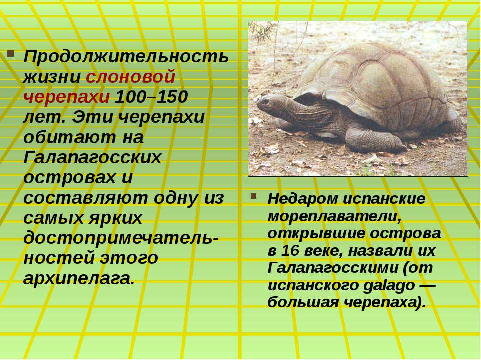 Продолжительность жизни слоновой черепахи 100–150 лет. Эти черепахи обитают н...