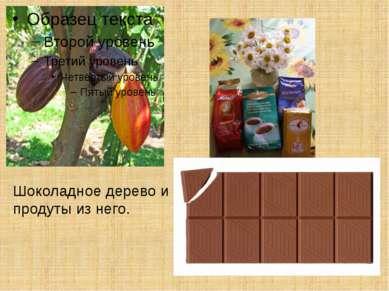 Шоколадное дерево и продуты из него.