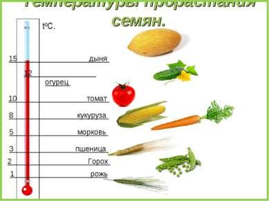 Температуры прорастания семян. 2 Горох 1 рожь 3 пшеница 5 морковь 15 дыня 12 ...