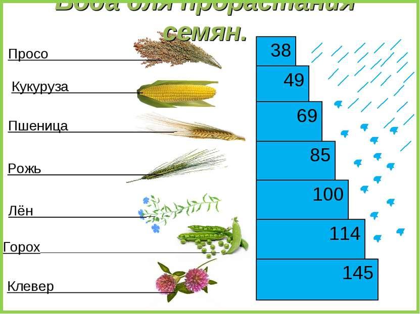 145 49 85 69 114 38 100 Кукуруза Пшеница Рожь Лён Горох Клевер Просо Вода для...