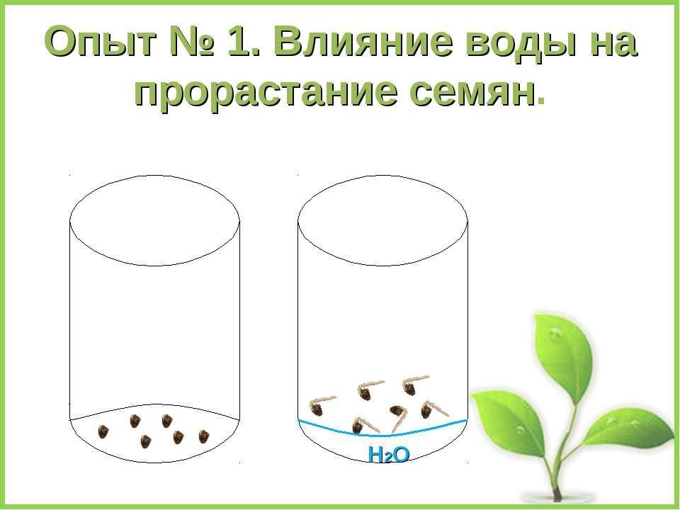 Опыт № 1. Влияние воды на прорастание семян. Н2О