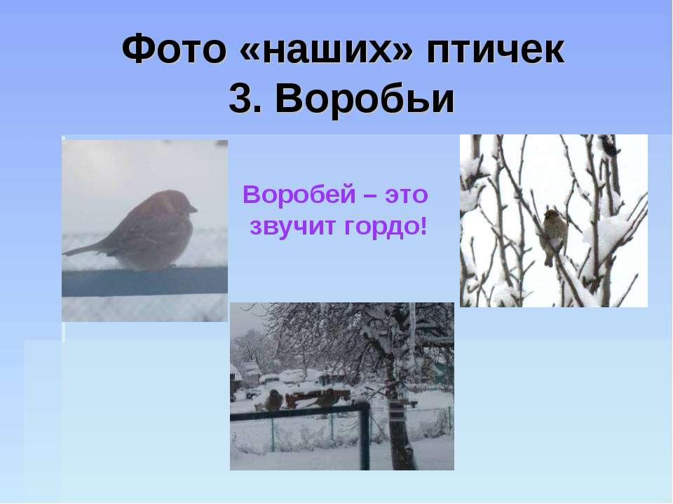 Фото «наших» птичек 3. Воробьи Воробей – это звучит гордо!