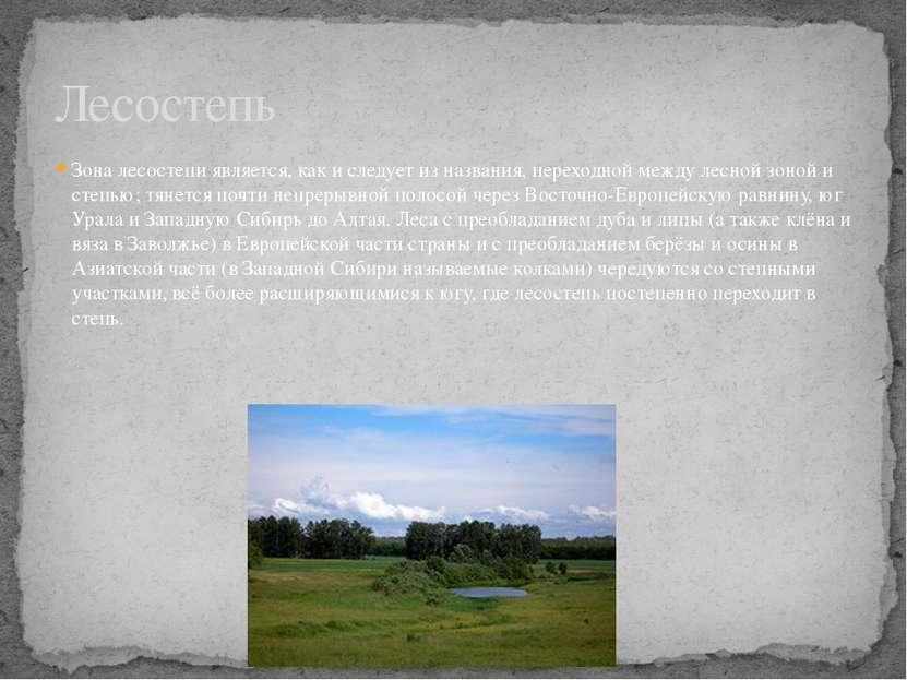 Зона лесостепи является, как и следует из названия, переходной между лесной з...