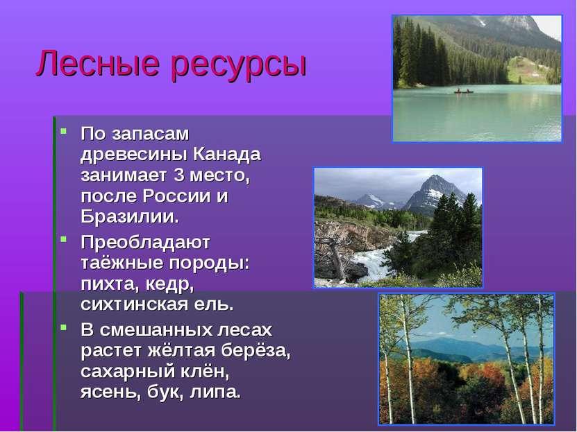 Лесные ресурсы По запасам древесины Канада занимает 3 место, после России и Б...