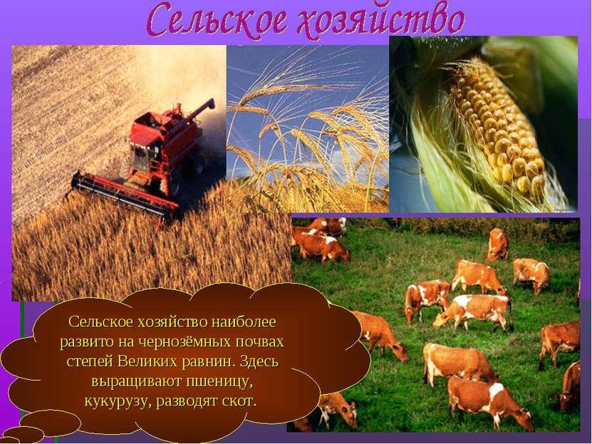 Сельское хозяйство наиболее развито на чернозёмных почвах степей Великих равн...