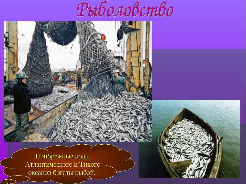 Прибрежные воды Атлантического и Тихого океанов богаты рыбой.