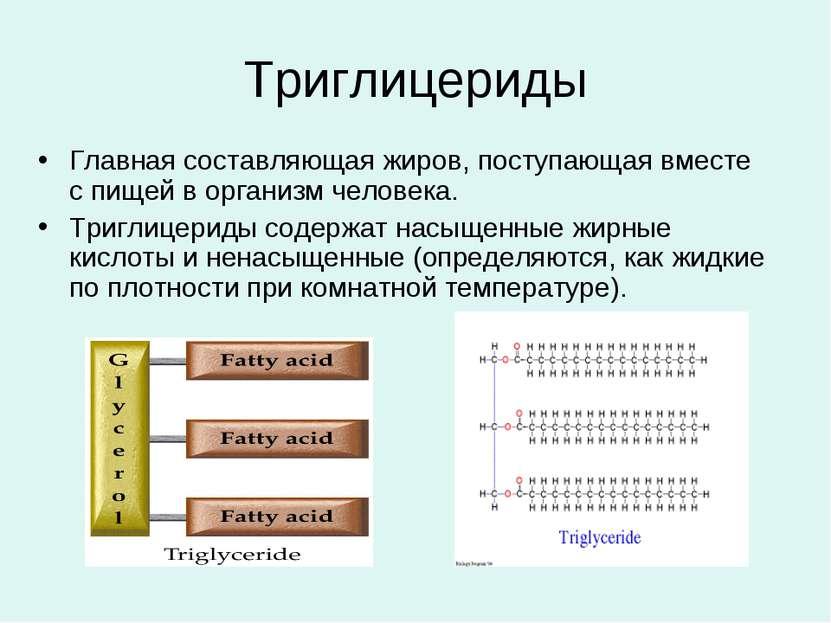 Триглицериды Главная составляющая жиров, поступающая вместе с пищей в организ...