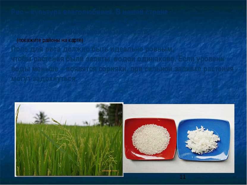 Рис – культура влаголюбивая. В нашей стране он выращивается в основном на Куб...