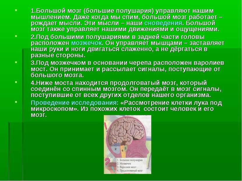 1.Большой мозг (большие полушария) управляют нашим мышлением. Даже когда мы с...