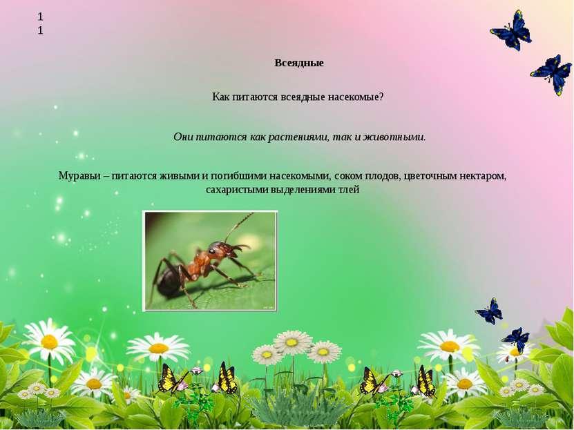 Всеядные Как питаются всеядные насекомые? Они питаются как растениями, так и ...